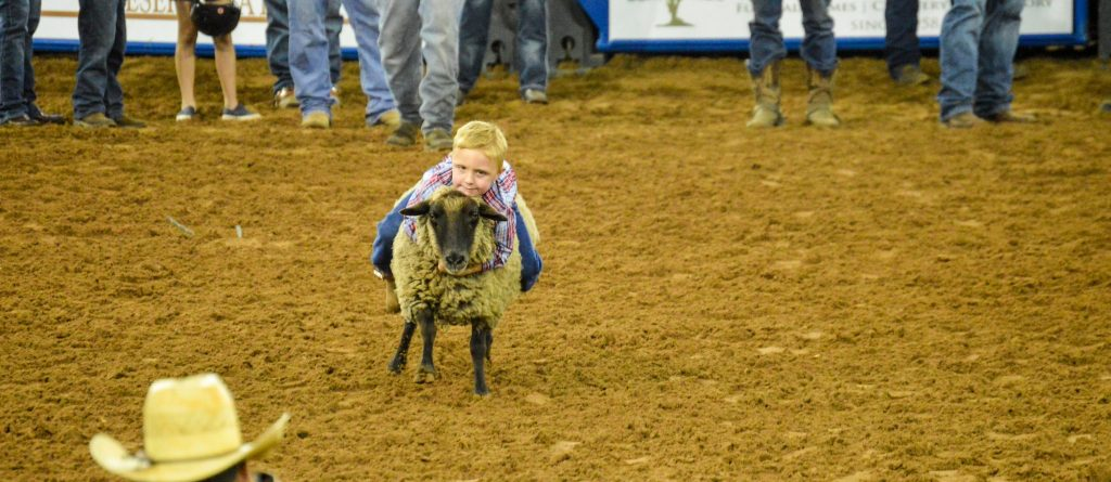 Mutton Bustin at Silver Spurs Rodeo