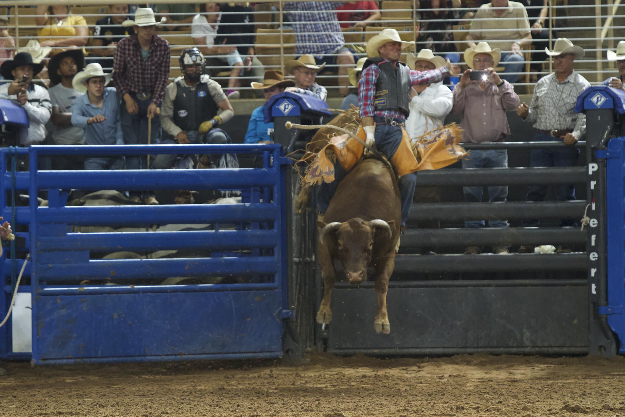 bull riding in florida