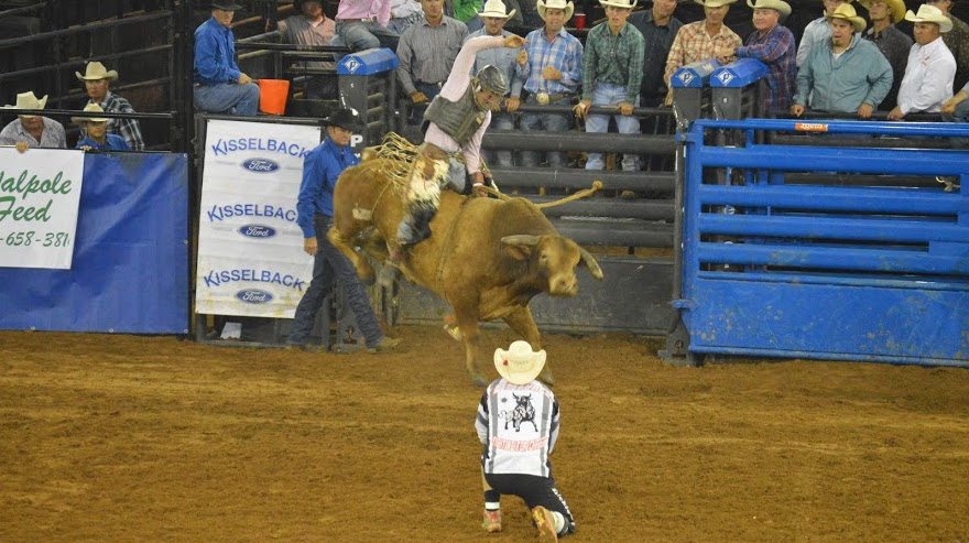 how scoring works in bull riding