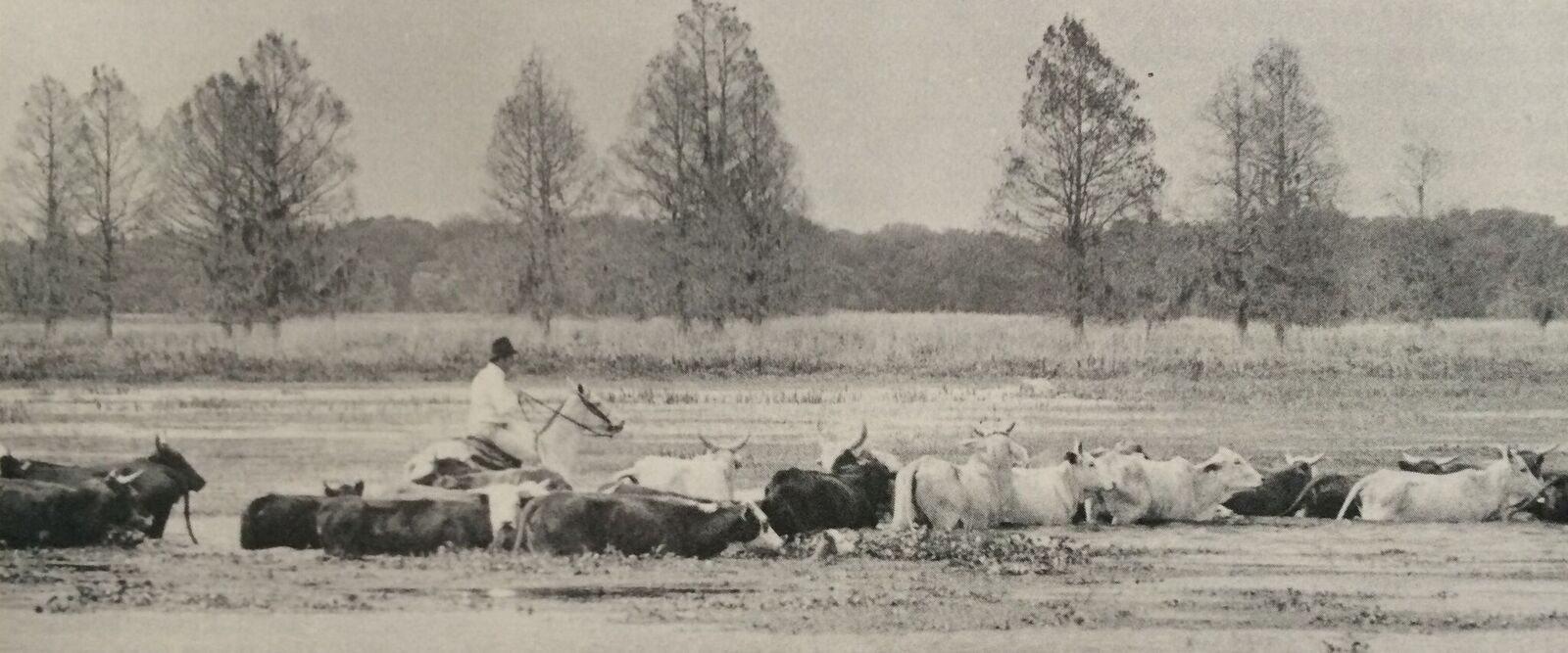 kowtown osceola
