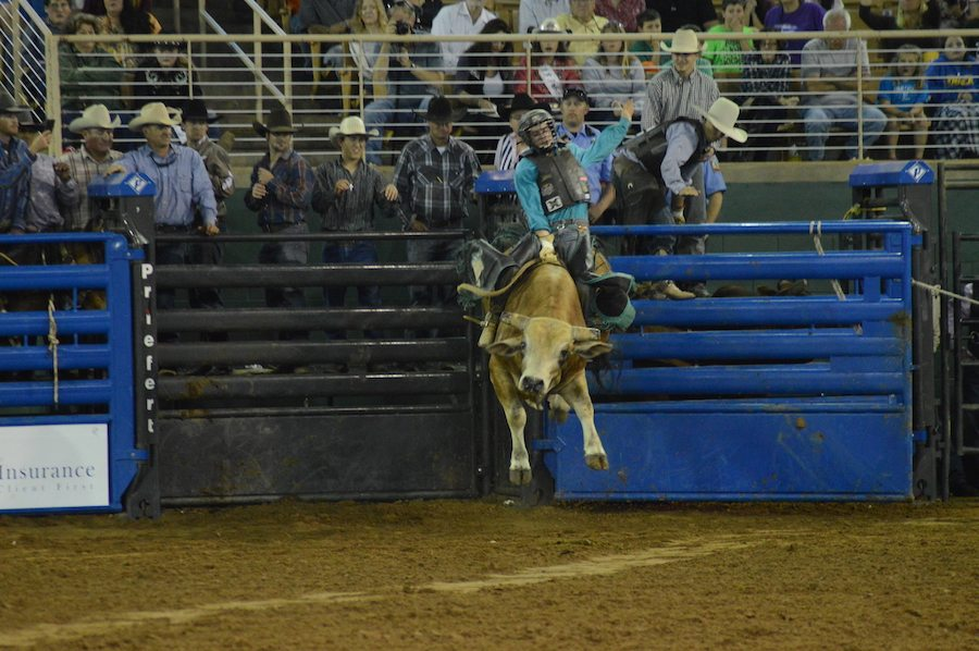 Bull Riding at the Silver Spurs Rodeo