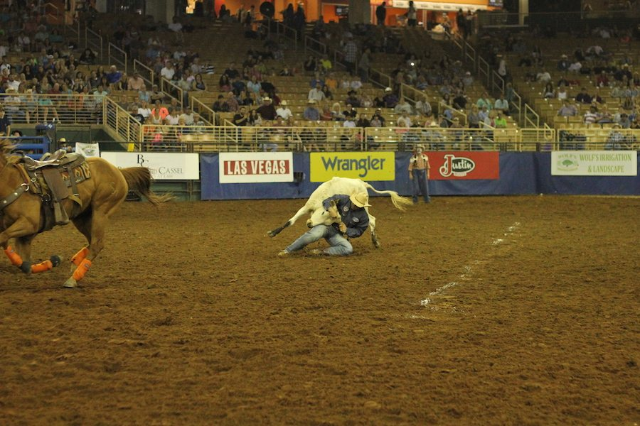 Steer wrestling at the Silver Spurs Rodeo