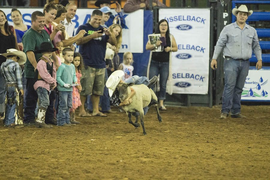 Mutton Busting at the Silver Spurs Rodeo
