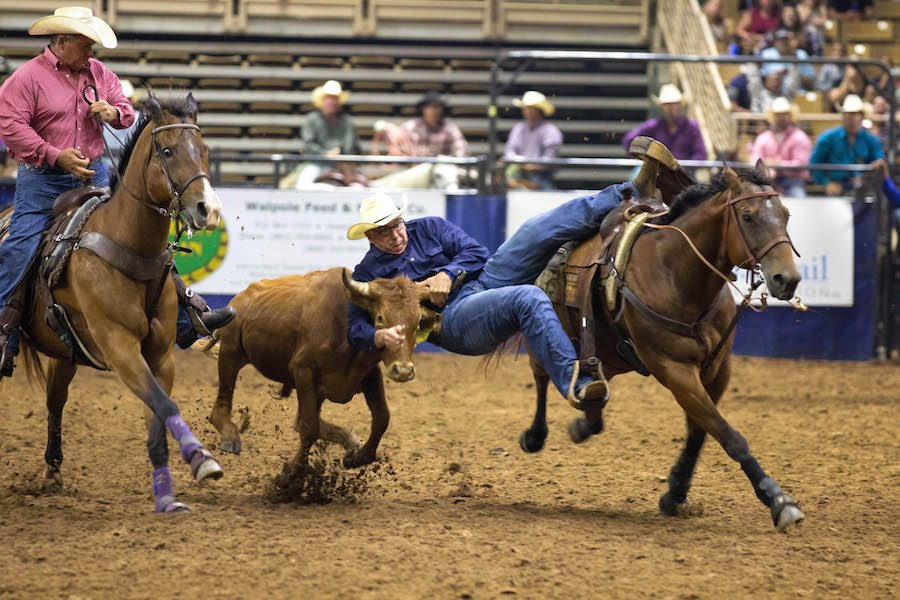 Steer Wrestling in Florida