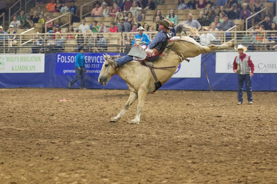 Bareback riding at the Silver Spurs Rodeo