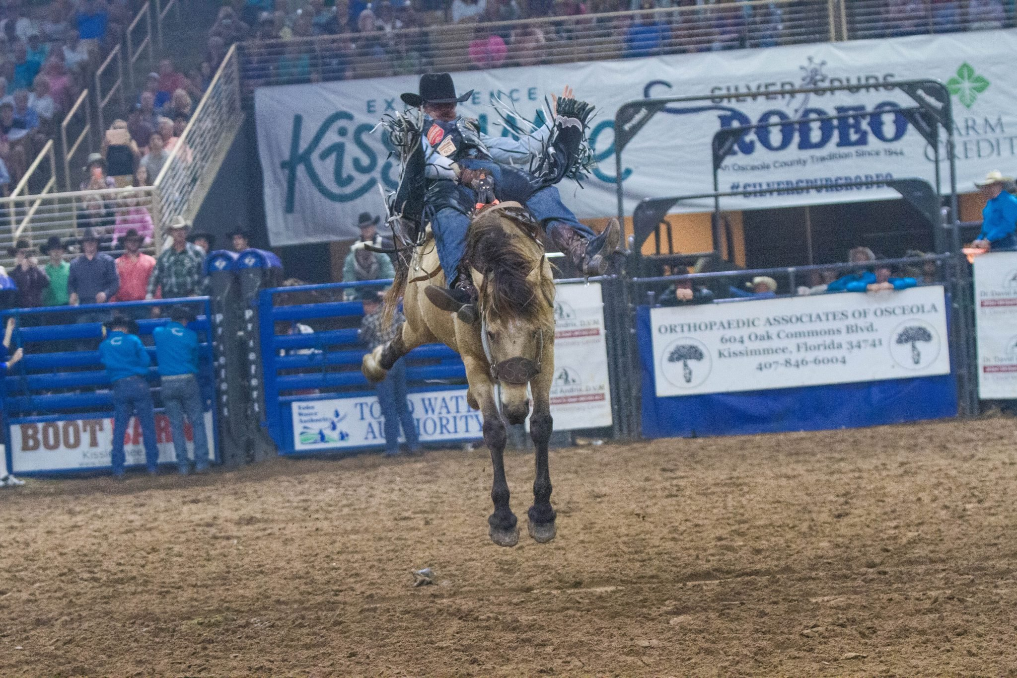 cowboy on the back of a bucking bronc at a rodeo