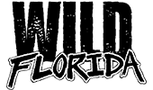 Wild Florida Airboats - Silver Spurs Rodeo Sponsor
