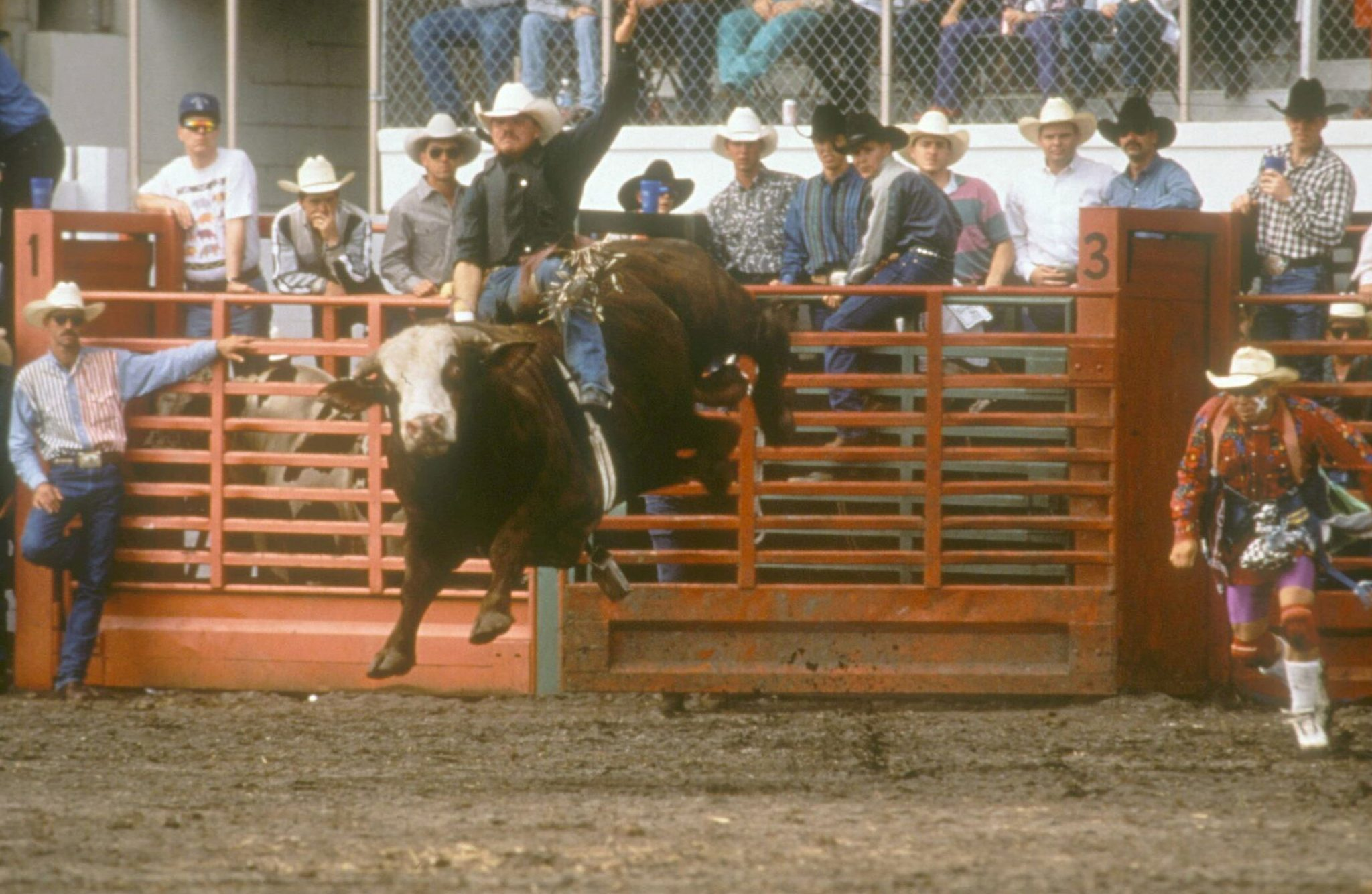 bullrider at the outdoor Silver Spurs Arena