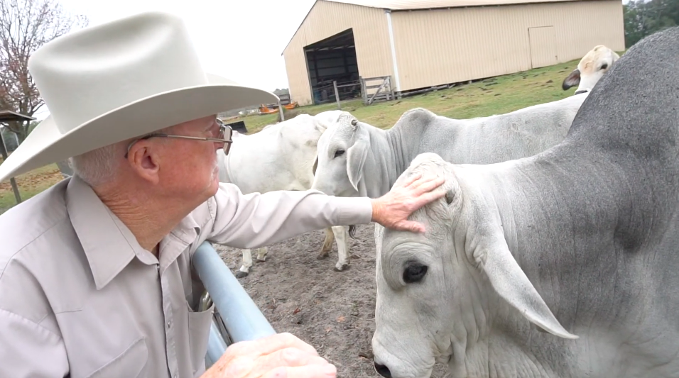 Mike White petting his cattle