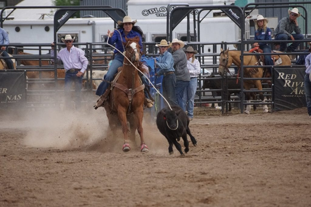 Cowgirl roping a calf on a horse