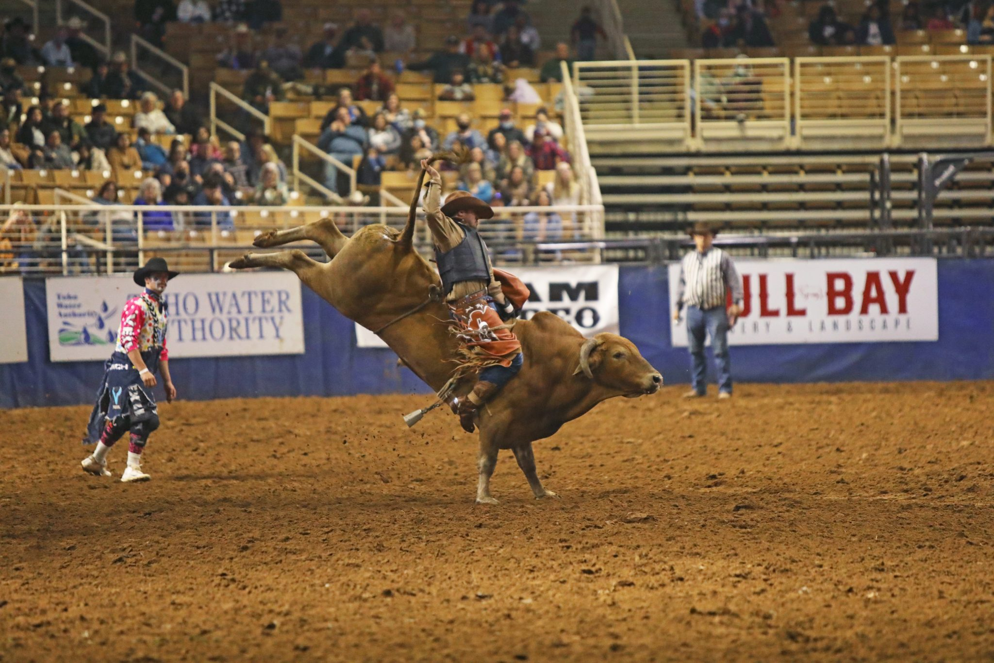 bull riding brown bull with back legs in the air