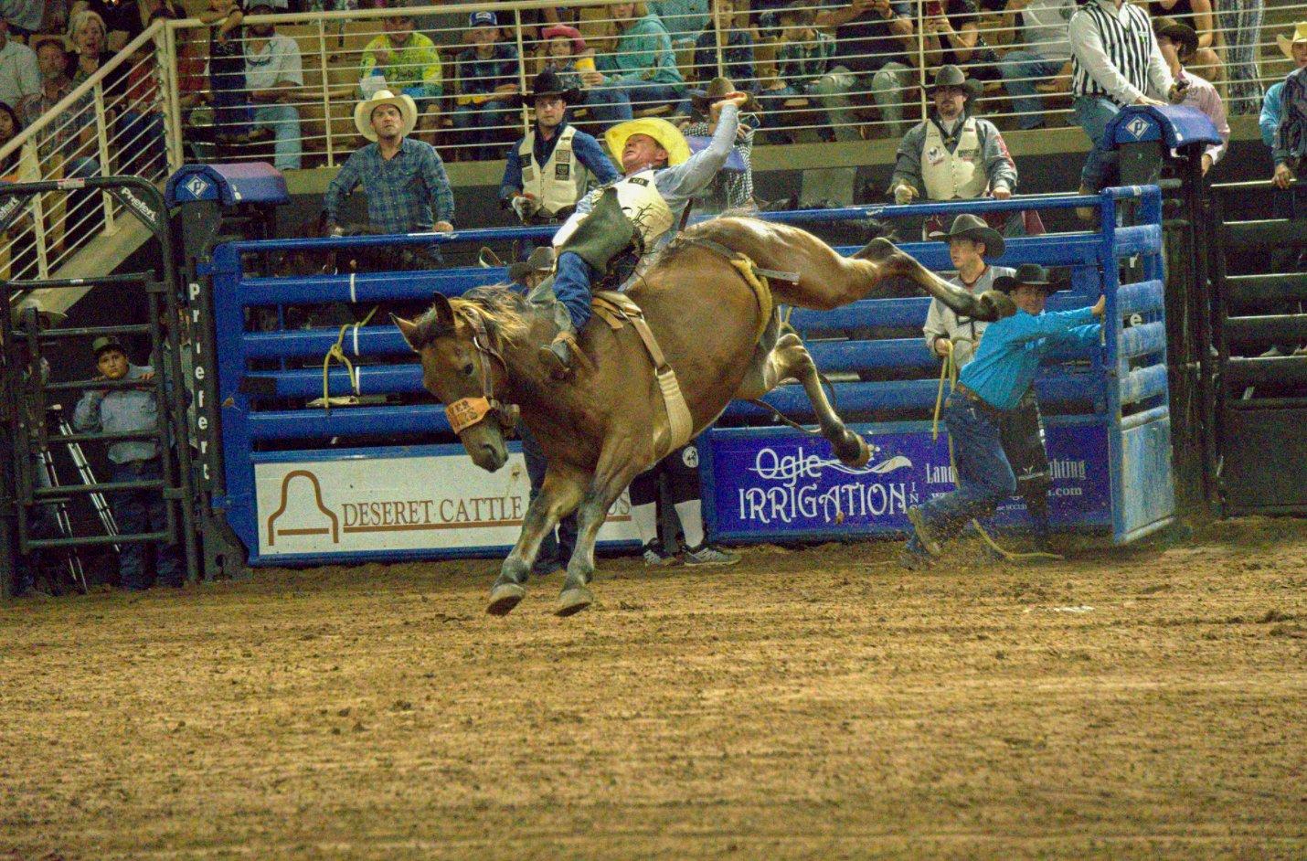 Brown bucking horse in an in-door arena with bareback rider